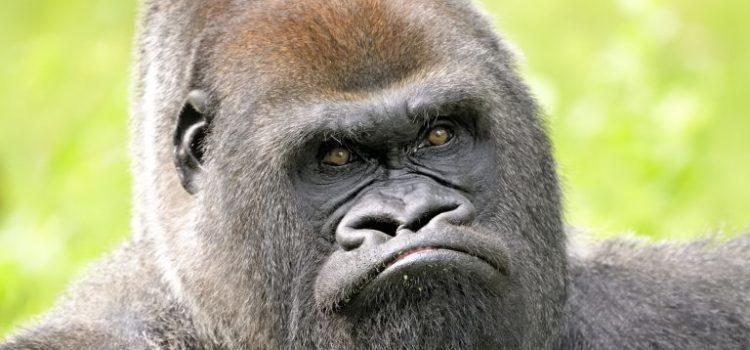 Hoe je zoogdierenbrein discussies zinloos maakt